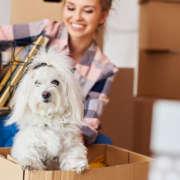 Préparer son déménagement avec un animal de compagnie